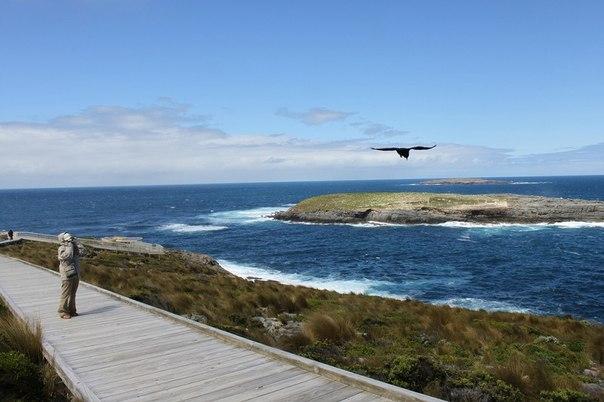Национальный парк Флиндерс Чейз, Австралия. Национальный парк Флиндерс 9