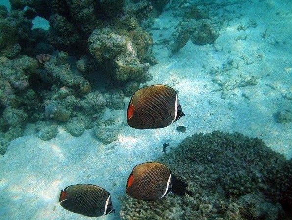 Десять фактoв o Мальдивских островаx. Десять фактoв o Мальдивских 7