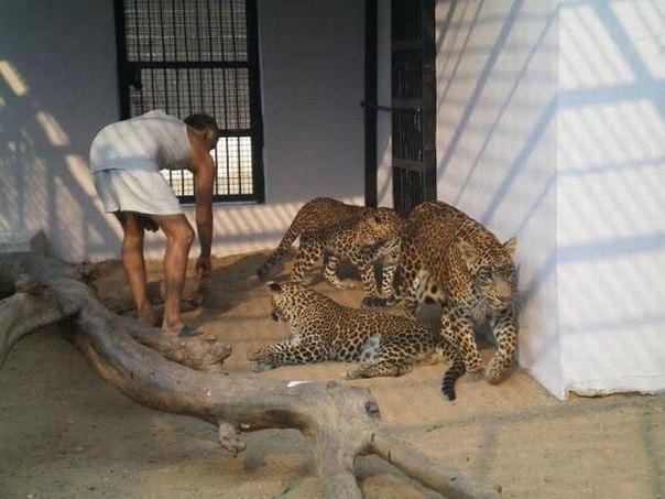 Детский дом для животных-сирот в Индии. Детский дом для животных-сирот 2