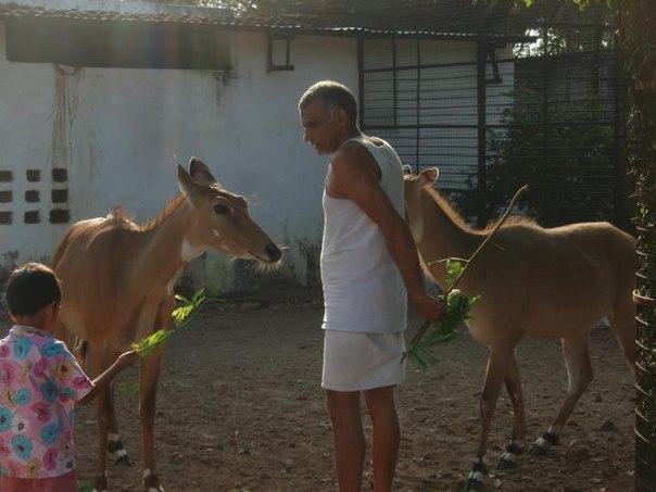 Детский дом для животных-сирот в Индии. Детский дом для животных-сирот 6