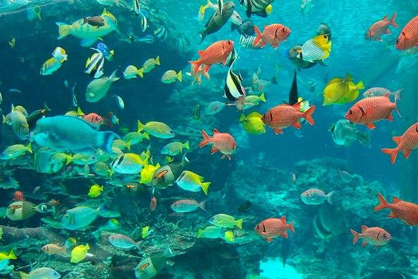 Okinawa Churaumi Aquarium. Okinawa Churaumi Aquarium 1