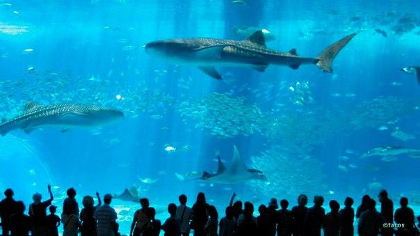 Okinawa Churaumi Aquarium. Okinawa Churaumi Aquarium 2