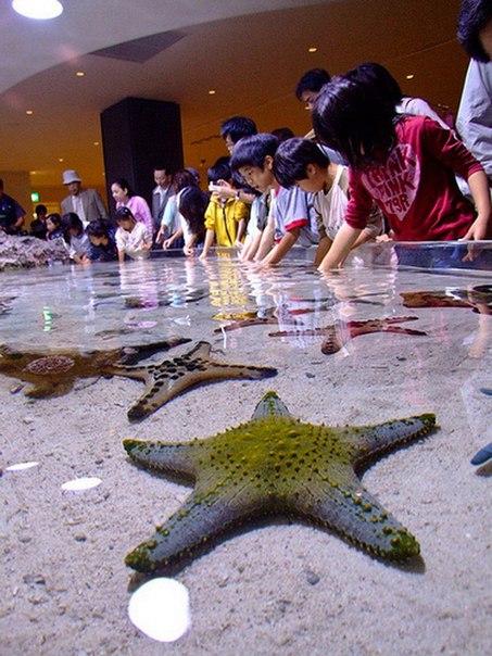 Okinawa Churaumi Aquarium. Okinawa Churaumi Aquarium 3