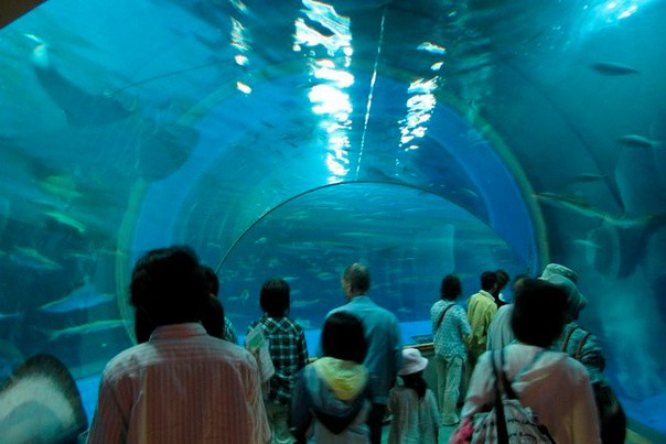 Okinawa Churaumi Aquarium. Okinawa Churaumi Aquarium 4