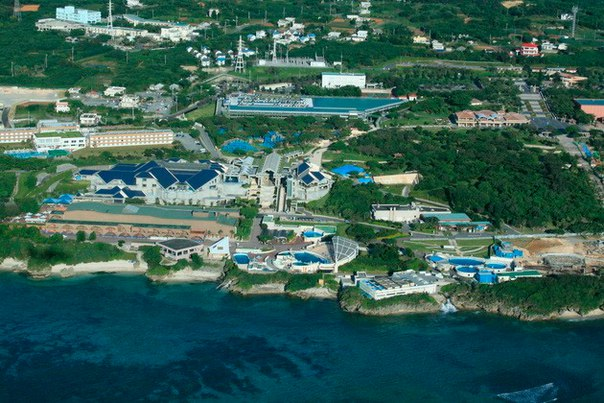 Okinawa Churaumi Aquarium. Okinawa Churaumi Aquarium 6