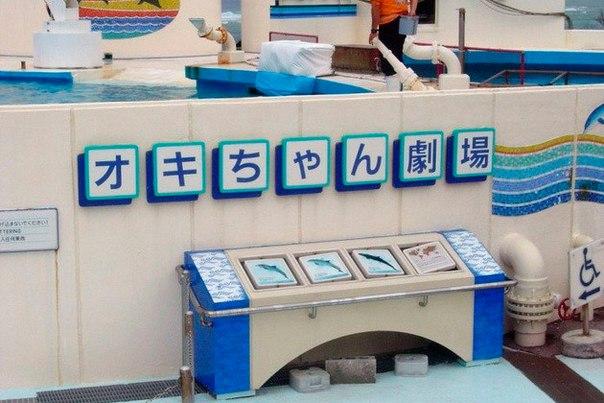 Okinawa Churaumi Aquarium. Okinawa Churaumi Aquarium 7
