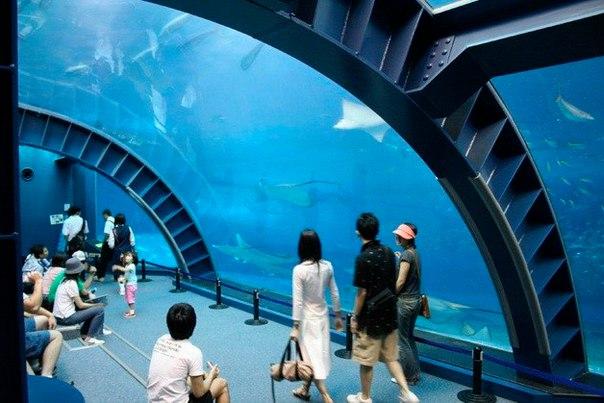 Okinawa Churaumi Aquarium. Okinawa Churaumi Aquarium 8