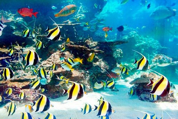 Okinawa Churaumi Aquarium. Okinawa Churaumi Aquarium 9