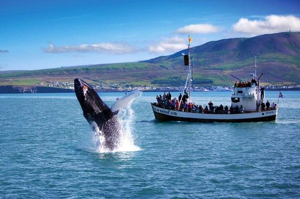 Удивительная страна Исландия. Удивительная страна Исландия 9