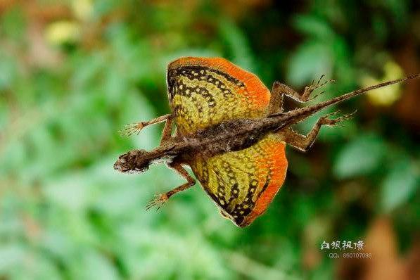 10 удивительных животных тропических лесов. 10 удивительных животных 1