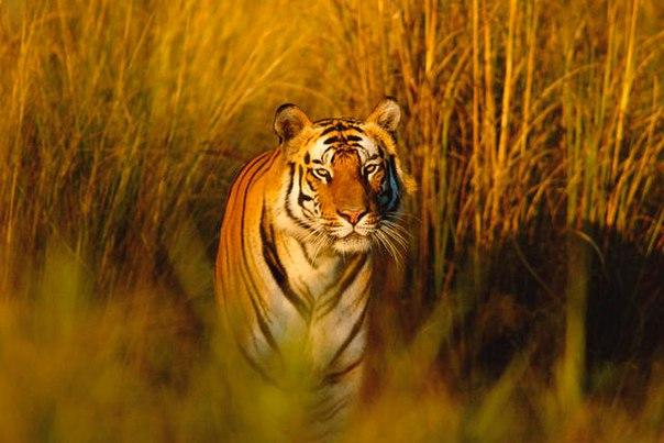 10 удивительных животных тропических лесов. 10 удивительных животных 2