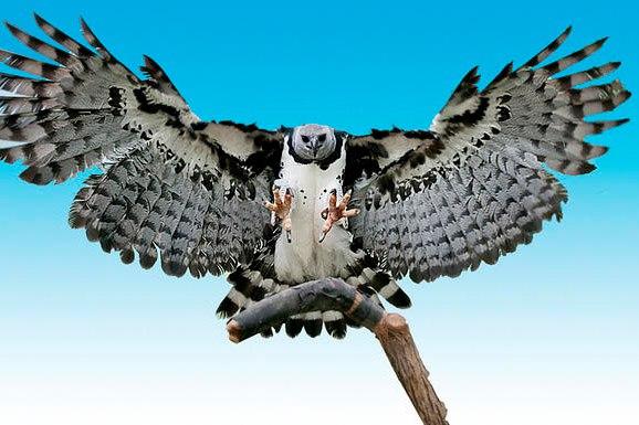 10 удивительных животных тропических лесов. 10 удивительных животных 3