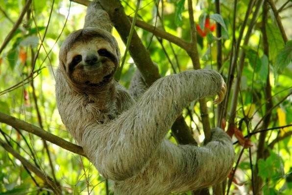 10 удивительных животных тропических лесов. 10 удивительных животных 4
