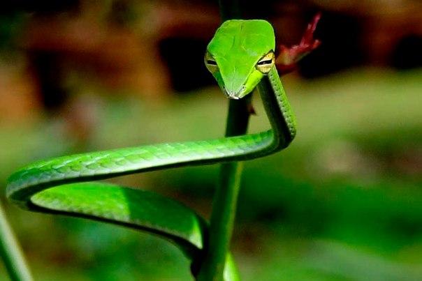 10 удивительных животных тропических лесов. 10 удивительных животных 5