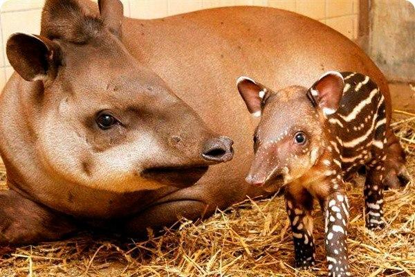 10 удивительных животных тропических лесов. 10 удивительных животных 6