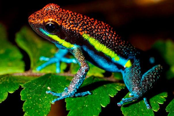 10 удивительных животных тропических лесов. 10 удивительных животных 7
