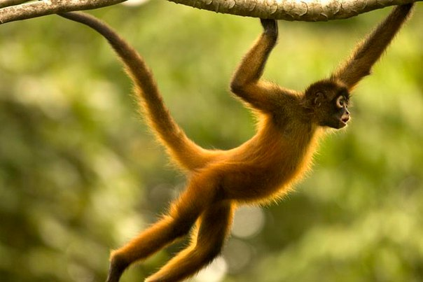 10 удивительных животных тропических лесов. 10 удивительных животных 8