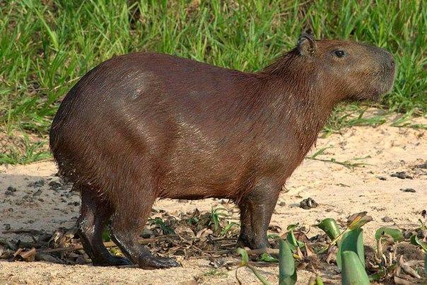 10 удивительных животных тропических лесов. 10 удивительных животных 9