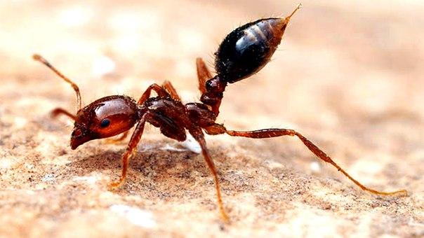 Самые опасные для человека насекомые