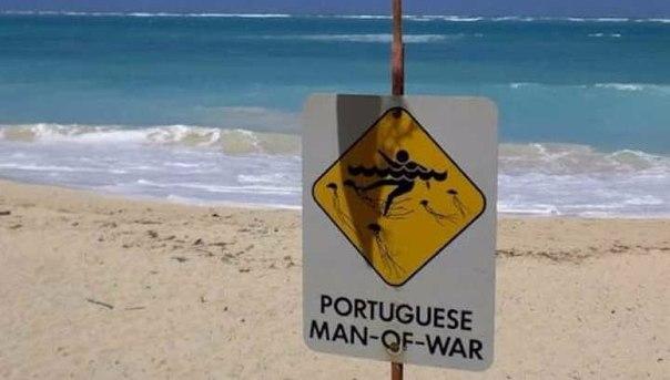 Если вы увидите на пляже это существо, бегите!. Если вы увидите на пляже это 1