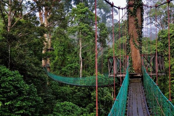 Удивительный мир дикой природы: остров Борнео. Удивительный мир дикой природы 3