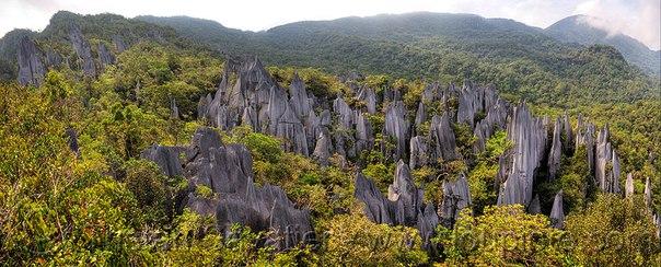 Удивительный мир дикой природы: остров Борнео. Удивительный мир дикой природы 4