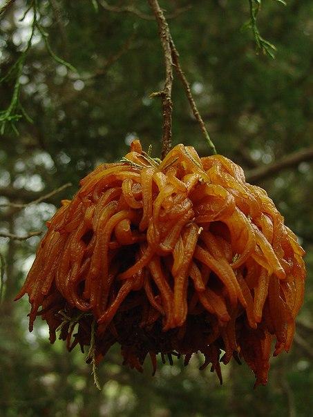 Жуткие растения из ночных кошмаров, которые существуют на самом деле. Жуткие растения из ночных 7
