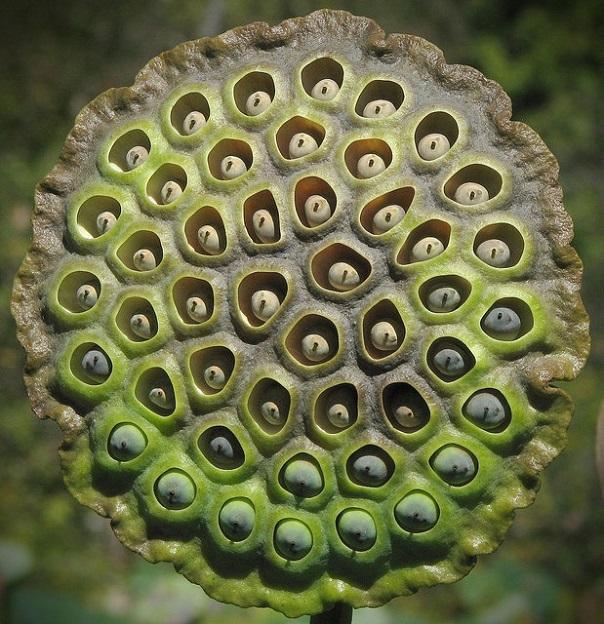 Жуткие растения из ночных кошмаров, которые существуют на самом деле. 18251.jpeg