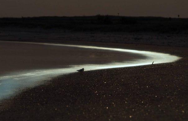 Удивительные заливы с невероятной подсветкой воды. Удивительные заливы с 1
