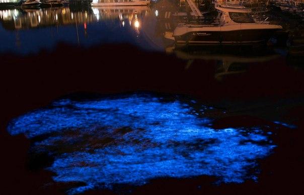 Удивительные заливы с невероятной подсветкой воды. Удивительные заливы с 9