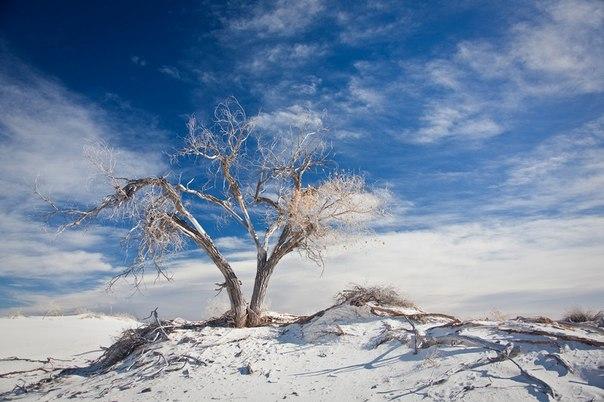 Пустыня Белых Песков в Нью-Мексико. Пустыня Белых Песков в 1