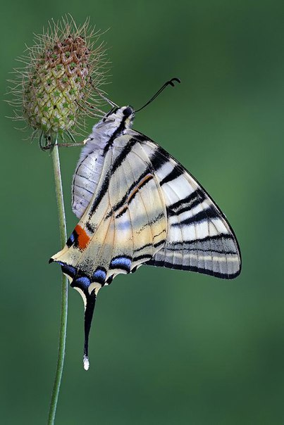 Легенды и интересное о бабочках. Легенды и интересное о 1