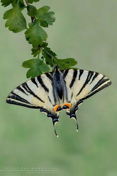 Легенды и интересное о бабочках. Легенды и интересное о 3