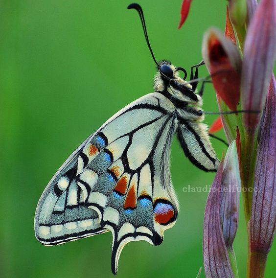 Легенды и интересное о бабочках. Легенды и интересное о 4