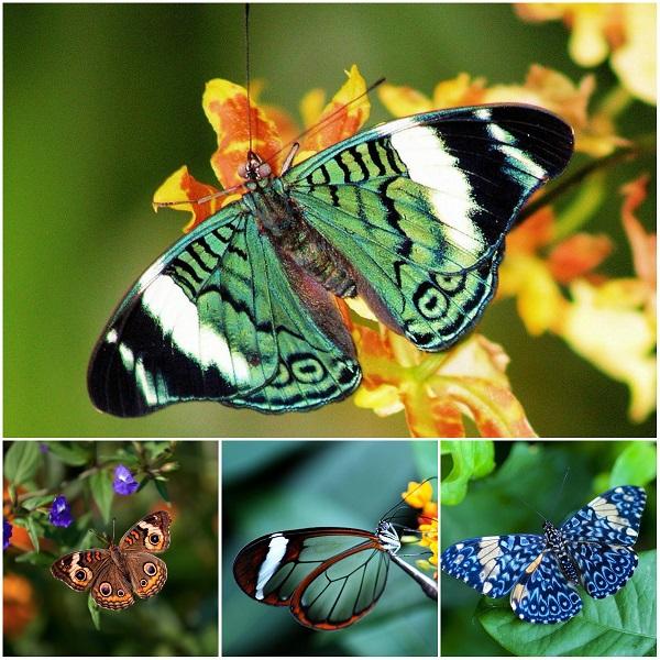 Легенды и интересное о бабочках. 16303.jpeg