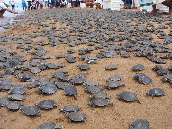 Разговорчивые черепахи. 18313.jpeg