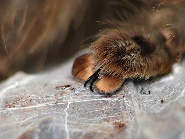 Выяснилось, что у пауков на лапах есть крошечные когти. Выяснилось, что у пауков на 1
