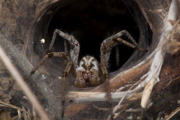 10 самых отвратительных паукообразных в мире. 10 самых отвратительных 3