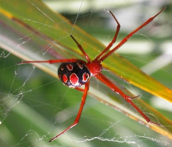 10 самых отвратительных паукообразных в мире. 10 самых отвратительных 5