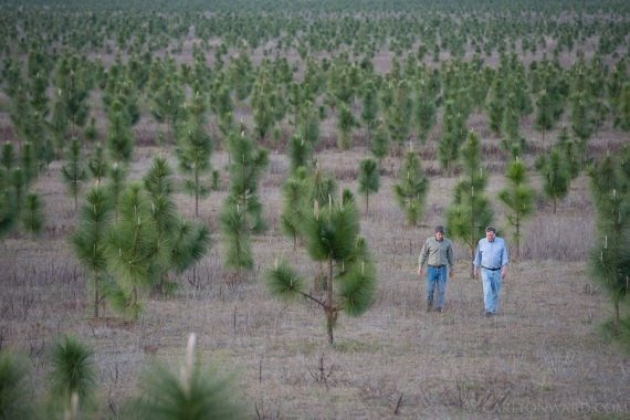 Человек посадил 8 млн деревьев