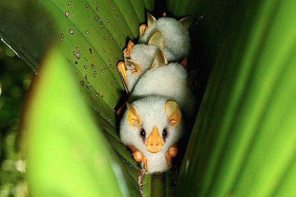 Необычные летучие мыши
