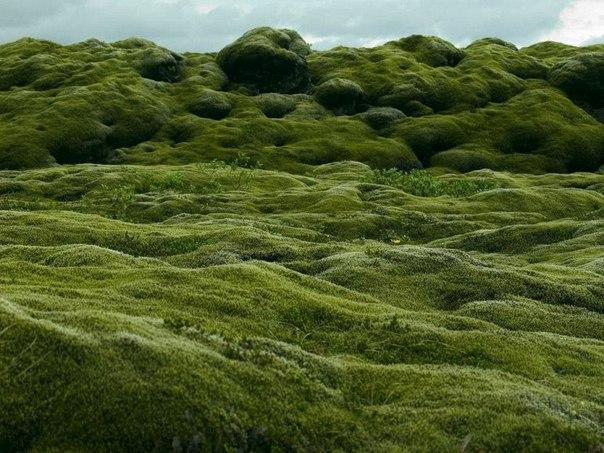 Живописные лавовые поля Исландии. Живописные лавовые поля 1