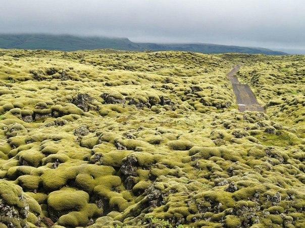 Живописные лавовые поля Исландии. Живописные лавовые поля 2