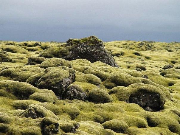 Живописные лавовые поля Исландии. Живописные лавовые поля 4