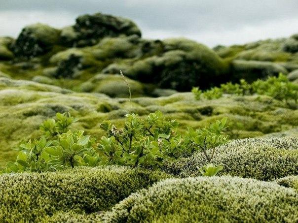 Живописные лавовые поля Исландии. Живописные лавовые поля 5