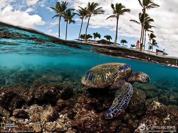 Остров Ко Тао (остров черепах), Тайланд. Остров Ко Тао (остров черепах) 4