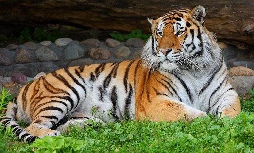 Самые красивые животные мира. Самые красивые животные мира 1