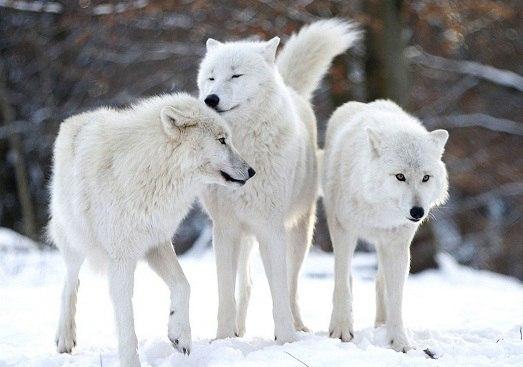 Самые красивые животные мира. Самые красивые животные мира 2