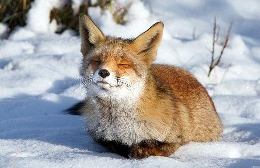 Самые красивые животные мира. Самые красивые животные мира 4