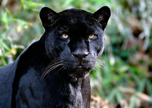 Самые красивые животные мира. Самые красивые животные мира 5